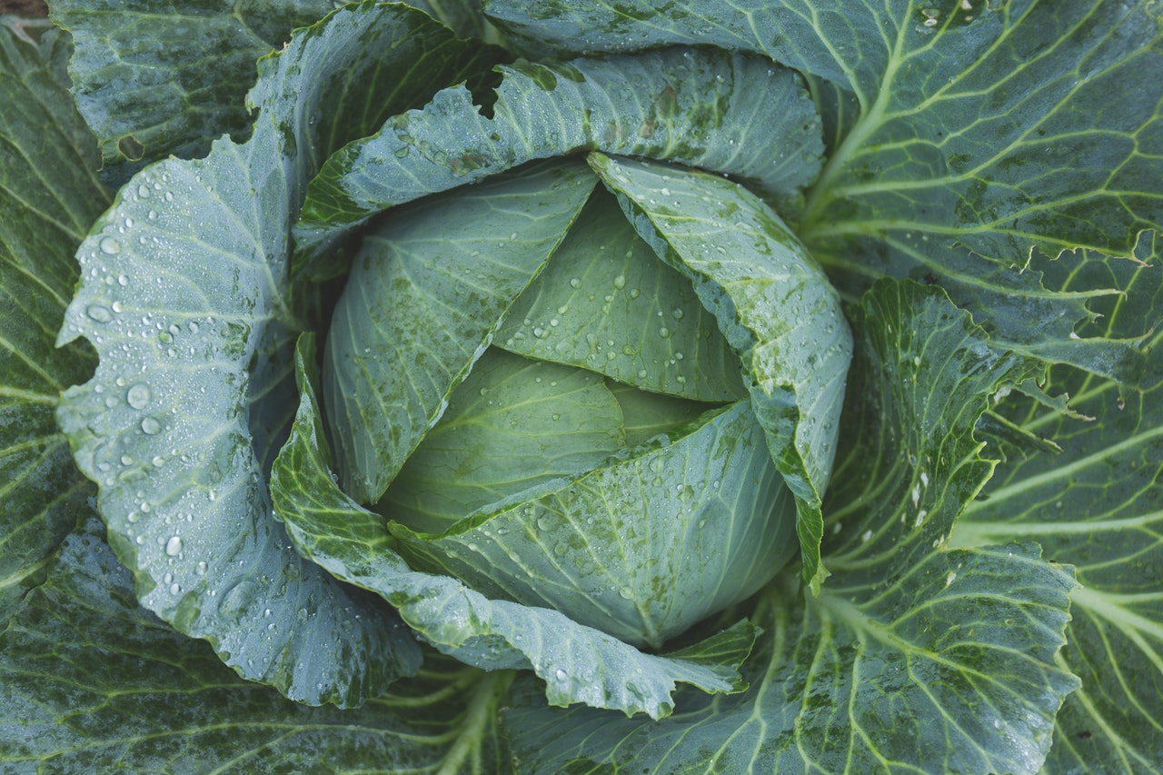 Irish Cabbage for Medieval Cooking