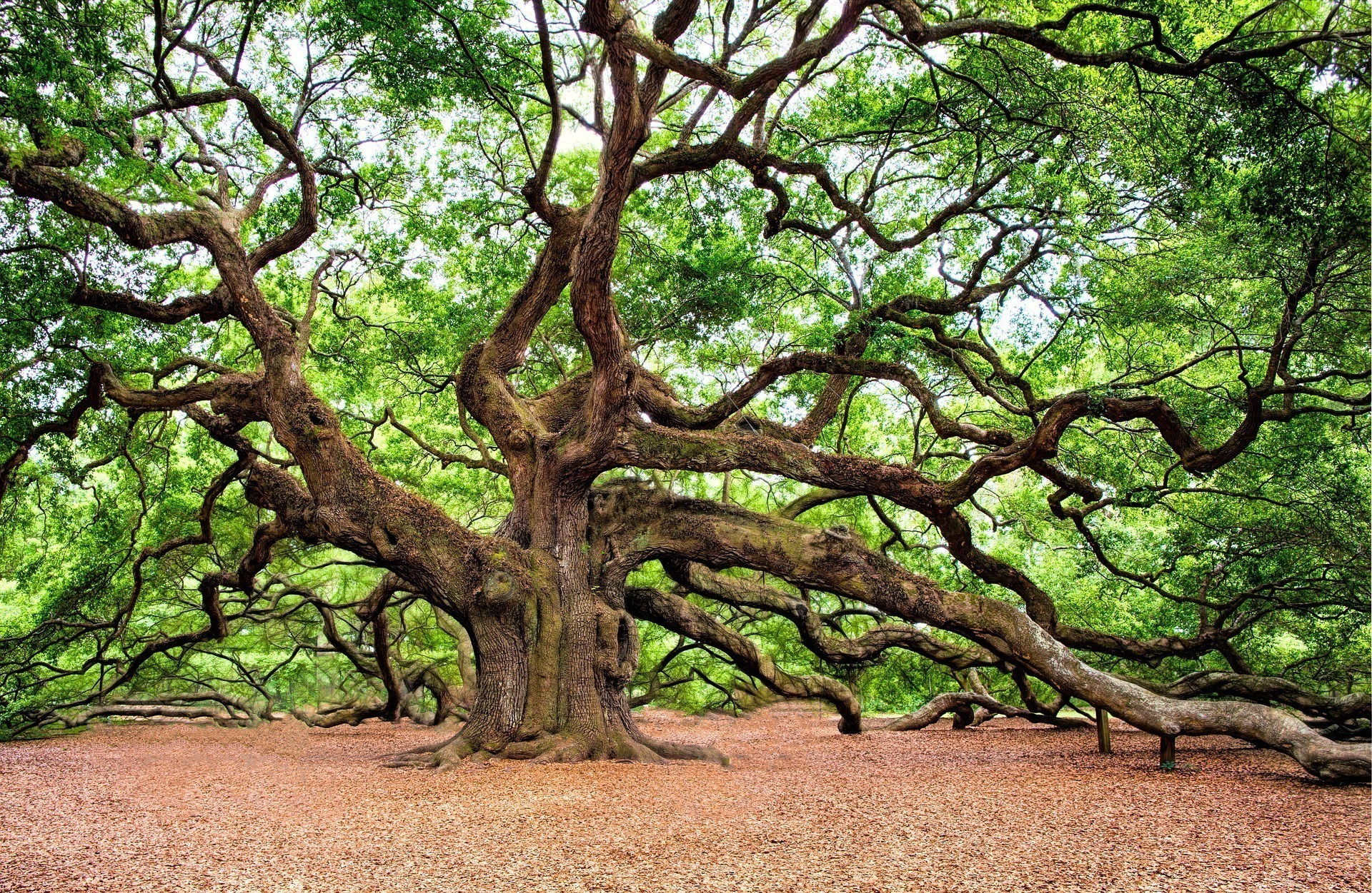 Pagan Priesthood Oak Tree Grove